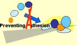adhesions-img05